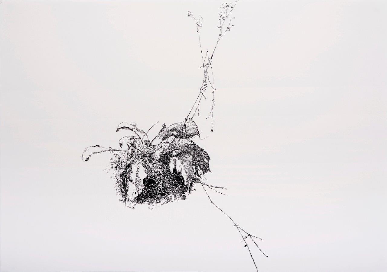 Renee Tophofen, Pflanze, Tusche auf Karton, 420x600cm_MIC5319