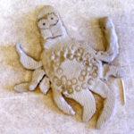 Kugelfisch und Schneckenkrebs